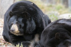Ecomuseum Bears